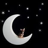 Chihuahua multi-colorida pequena na lua no fundo estrelado Fotografia de Stock