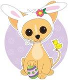 Chihuahua Pasqua Fotografia Stock Libera da Diritti