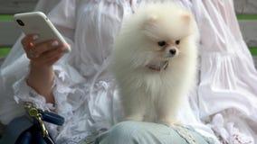Chihuahua peludo seu assento mestre no banco video estoque
