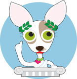 Chihuahua Philosopher Royalty Free Stock Photos