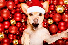 Christmas santa claus dog and xmas balls stock images