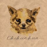 The Chihuahua is popular mini dog. Head of a toy terrier on watercolor background. Watercolor Animal collection: Dogs vector illustration