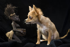 Chihuahua puppy and African souvenir Royalty Free Stock Images