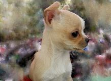 Chihuahua puppy on impressionistic background Stock Photos