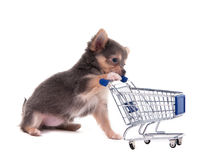 Chihuahua puppy pushing supermarket cart. Tiny Chihuahua puppy pushing supermarket cart, white background Stock Images