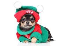 Chihuahua puppy in Santa costume. Funny Chihuahua puppy in Santa costume and Christmas hat lying on white background Stock Images