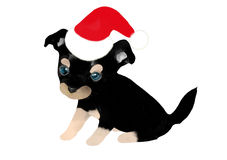 Chihuahua puppy in a santa hat Royalty Free Stock Photography