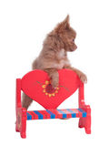 Chihuahua on a red heart shaped bench Stock Images
