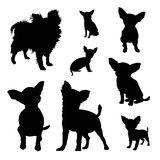 Chihuahua silhouette illustration set. Isolated on white stock illustration
