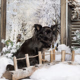 Chihuahua sitting on a bridge in a winter scenery Royalty Free Stock Photography