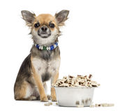 Chihuahua sitting next to bowl of food Stock Image