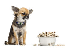 Chihuahua sitting next to bowl of food Royalty Free Stock Images
