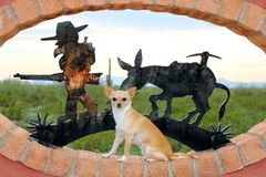 Chihuahua Sitting with Western Background. A dog, chihuahua, sitting in front of western bakground Stock Photo