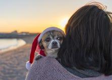 Chihuahua som kläs som Santa Claus arkivfoto