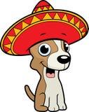 Chihuahua Sombrero Stock Photos