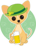 Chihuahua St. Pat's Royalty Free Stock Photography