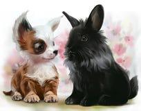 Chihuahua szczeniak i czarny królik Zdjęcia Stock