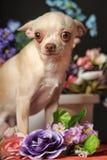 Chihuahua unter den Blumen Lizenzfreie Stockbilder