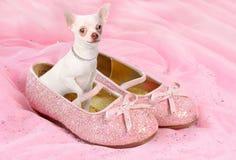 Chihuahua van de prinses Stock Afbeeldingen