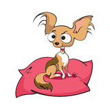 Chihuahua. Vector Illustration of Chihuahua sitting on a pillow Stock Photo