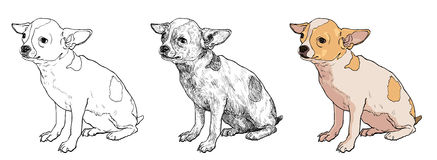 Chihuahua. The vector of chihuahua on sitting pose Stock Image