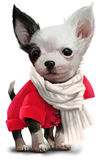 Chihuahua watercolor painting. Chihuahua in a jacket and scarf Royalty Free Stock Images