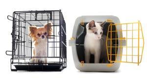 Chihuahua y gato en perrera Imagen de archivo libre de regalías
