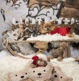 Chihuahua z Santa Claus kostiumem Obraz Stock