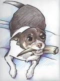 Chihuahua-Zeichnung lizenzfreie stockfotos