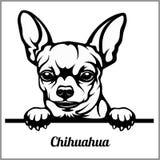 Chihuahua - zerkanie psy - traken twarzy głowa odizolowywająca na bielu royalty ilustracja