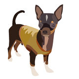 Chihuahuahond 1 Stock Afbeelding