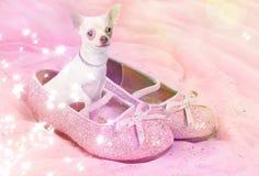 Chihuahuahond in roze glitteryschoen stock afbeelding