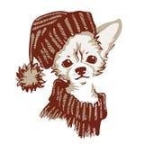 Chihuahuahond - vectorillustratie Royalty-vrije Stock Afbeeldingen