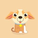 Chihuahuahund Stockbilder