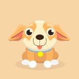 Chihuahuahund Lizenzfreie Stockfotografie