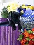 Chihuahuahund in der Geschenkbox und in den Blumen Stockbild