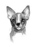 Chihuahuahund, nettes Gesicht, Chiwawa-Welpe, Aquarellillustration Stockbilder
