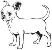 Chihuahuahundavel royaltyfri illustrationer