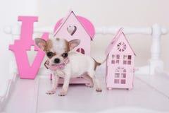 Chihuahuapuppy dichtbij roze huizen Stock Foto's