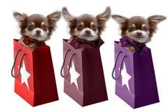 Chihuahuapuppy in giftzakken stock afbeeldingen
