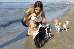 Chihuahuas and girl on the beach. Portrait of a cute purebred  chihuahuas and young woman on the beach Stock Images