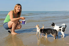 Chihuahuas and girl on the beach Royalty Free Stock Image