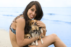 Chihuahuas and girl on the beach. Portrait of a cute purebred  chihuahuas and young woman on the beach Stock Photo