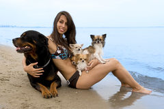 Chihuahuas and girl on the beach. Portrait of a cute purebred  chihuahuas, rottweiler and young woman on the beach Royalty Free Stock Photos