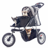 Chihuahuas in pushchair. Portrait of a cute purebred  chihuahuas in pushchair Royalty Free Stock Images