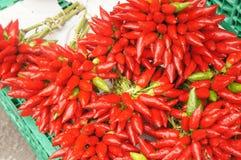 Chiilies rosso Fotografie Stock