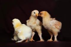 Chiken Stockbild
