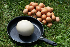 Chiken eggs and ostrich egg on pan Stock Image
