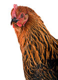 Chiken head Royalty Free Stock Photography