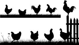 Chiken, hen, rooster - silhouettes Royalty Free Stock Image
